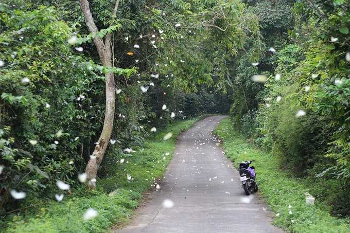 One Day Motorbike Tour to Cuc Phuong National Park