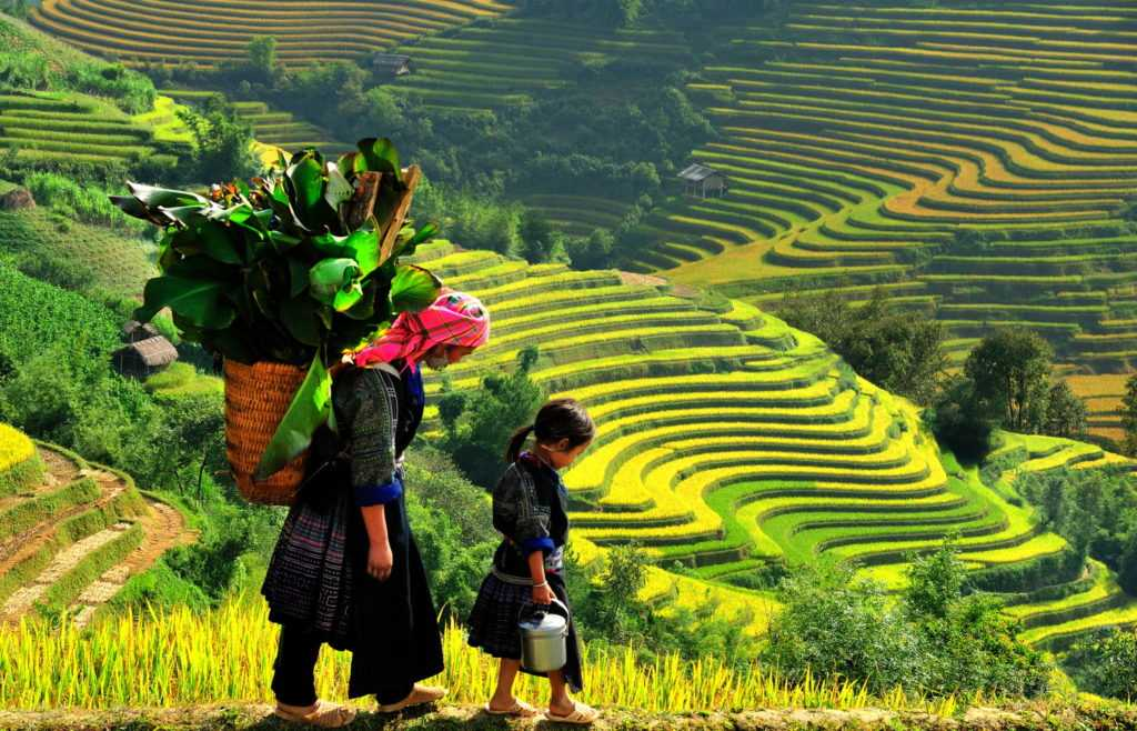 Colorful Rice Fields in Sapa